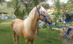 Soberano - Cavalo da Patroa